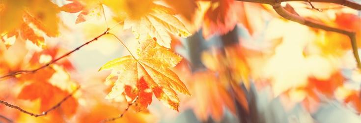 Здрави и красиви през есента