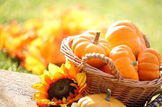 Пълноценно хранене през есента